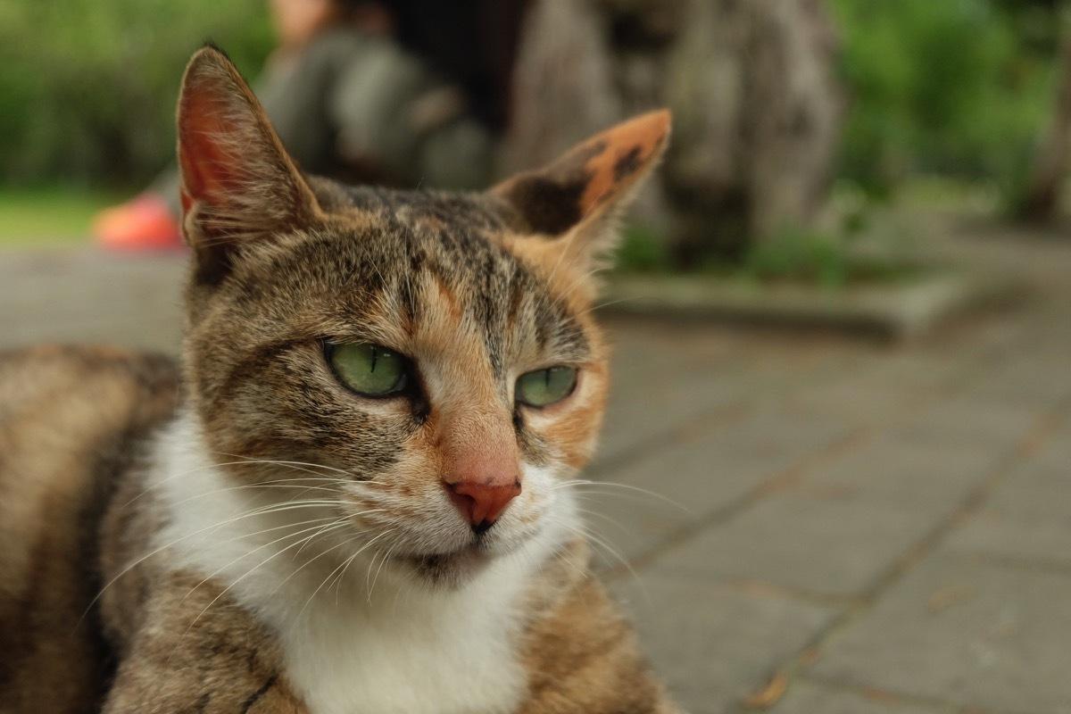 Cat 1744710 1920