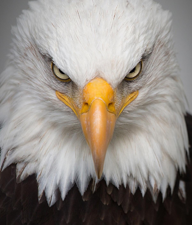 Eagle 2045655 1920