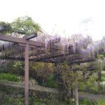 和歌山県橋本市の易産山子安地蔵寺にお参りしてきました
