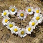 6つの愛の形 心理学の用語解説